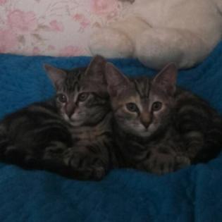 CEM chat adoption Orore et Orlie
