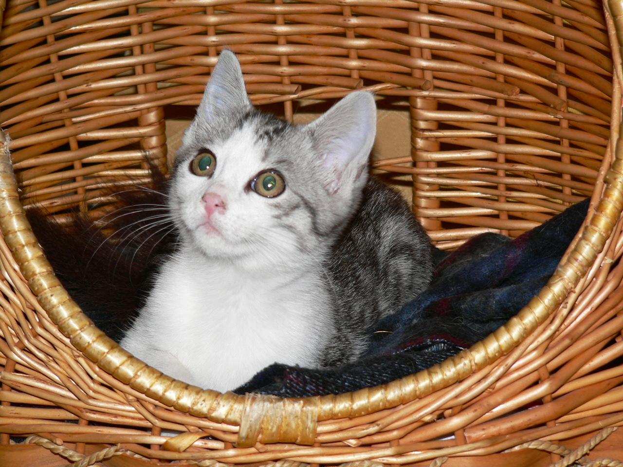 Des nouvelles de imia adoption chat cem montargis for Adaptation chat nouvelle maison