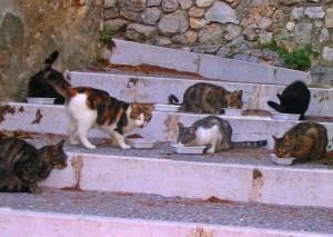 repas-des-chats-errants_15-06-09