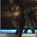 chaton a trop maigri