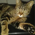 chat à adopter Jessica