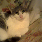 chat à adopter Matouvu