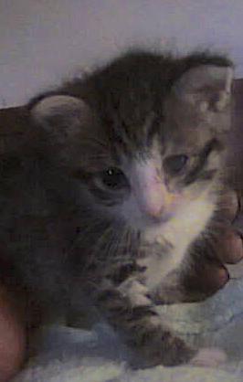 Adopter chaton 18