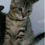 CEM chaton adoption Noella
