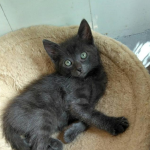 CEM chaton adoption Ninus