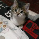 CEM chaton adoption Navaro