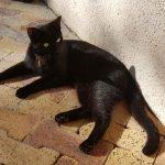 CEM chats perdus trouvés Mimi