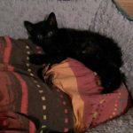 CEM chaton adoption Nybie