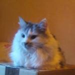 CEM chats perdus trouvés Jineka