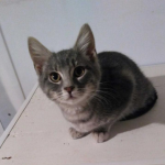 CEM chaton adoption Nolaf