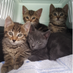 CEM chaton adoption Chatons