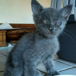 CEM chaton adoption Ourra