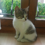 CEM chaton adoption Otisse