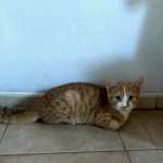 CEM chaton adoption Oliver