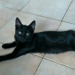 CEM chaton adoption Orace