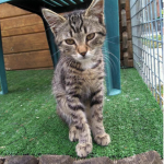 CEM chaton adoption Opus