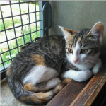 CEM chaton adoption Opaline