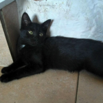 CEM chaton adoption Ortense