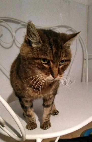 """Ma pépette"""" par ma mère jusquà ladolescence et même pendant, Par contre ma mère mappelle ça petite chatte et jaime pas trop limage :/ lol."""