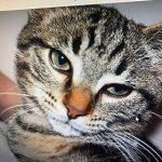 CEM chats perdus trouvés Raymond