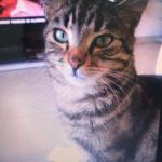 CEM chats perdus trouvés Karis