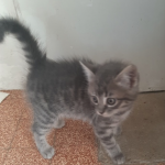 CEM chaton adoption Princesse