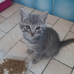 chat à adopter Poupette