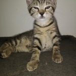 CEM chaton adoption Pinki