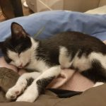 CEM chaton adoption Octave
