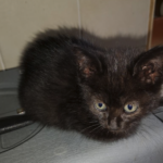 CEM chaton adoption Prunelle